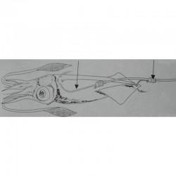 Seppia/Calamaro